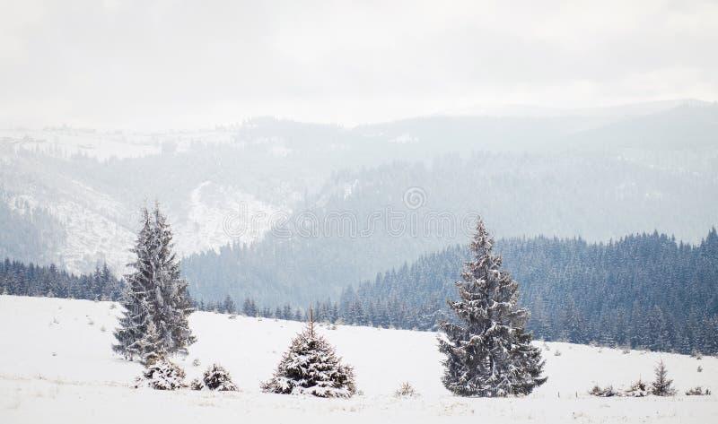 Het landschap van het de wintersprookjesland, sneeuwsparrenachtergrond royalty-vrije stock fotografie
