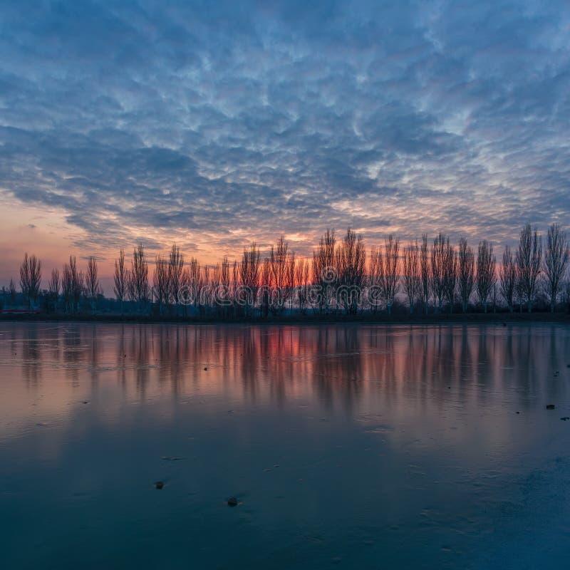 Het landschap van de de winterzonsondergang met steeg van populieren stock fotografie