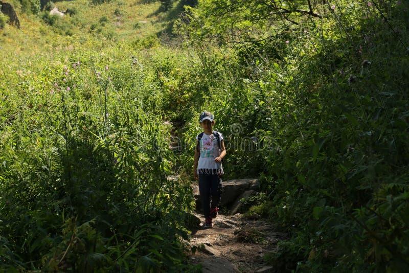 Het landschap van de zomer in de bergen royalty-vrije stock fotografie