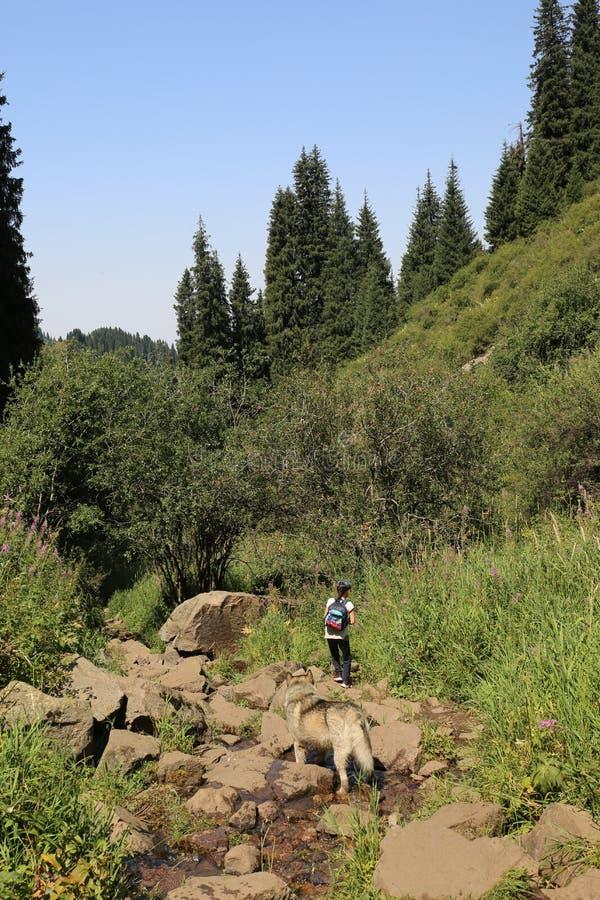 Het landschap van de zomer in de bergen stock afbeelding