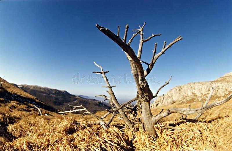 Het landschap van de zomer met alleen boom stock foto's