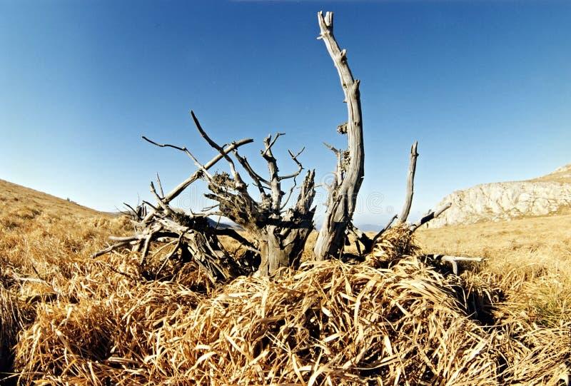 Het landschap van de zomer met alleen boom royalty-vrije stock foto
