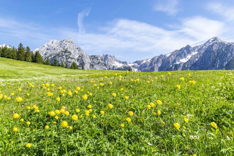 Het landschap van de zomeralpen met bloemweiden en bergketen op achtergrond De foto taked dichtbij Walderalm, Oostenrijk, Gnadenw royalty-vrije stock afbeelding