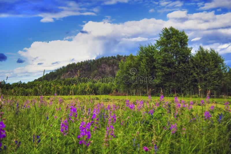 Het landschap van de de zomerweide met groen gras en wilde bloemen op de achtergrond van een bos en bergen stock afbeeldingen
