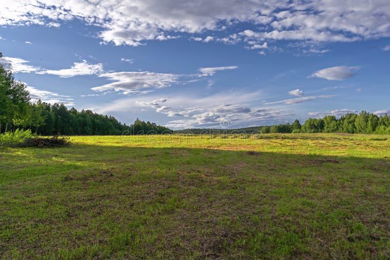Het landschap van de de zomerweide met groen gras en wilde bloemen op de achtergrond van een bos royalty-vrije stock fotografie