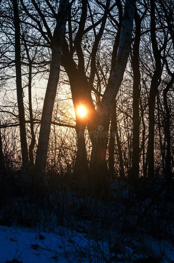 Het landschap van de zonsondergangwinter met weiden en bos in Geesthacht dichtbij Hamburg stock afbeelding