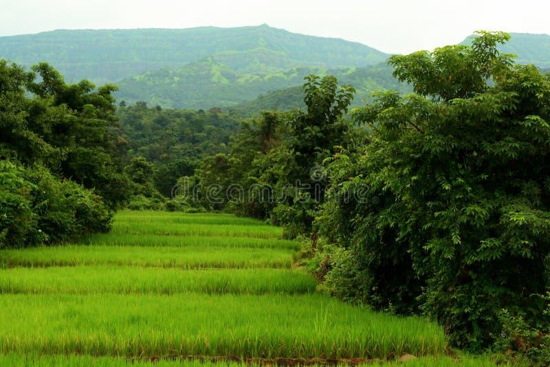 Het Landschap van Deorukh stock fotografie