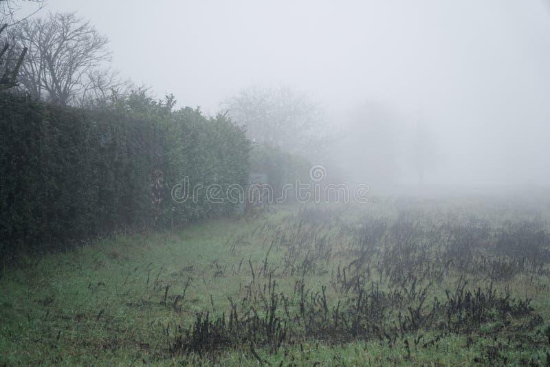 Het landschap van dichte mist op het gebied en het silhouet van struik perken de warme winter in stock fotografie