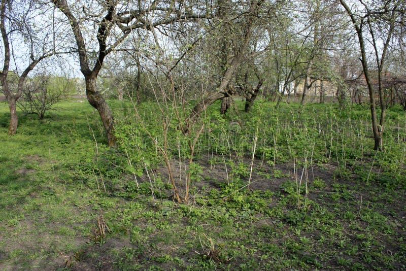 Het landschap van gras, framboos, appel en groen milieu in de tuin als natuurlijke achtergrond stock afbeelding