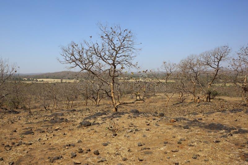 Het landschap van Gujarat stock foto's