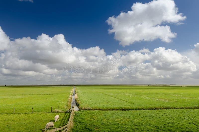 Het landschap van het alluviale gebied in Holland royalty-vrije stock foto