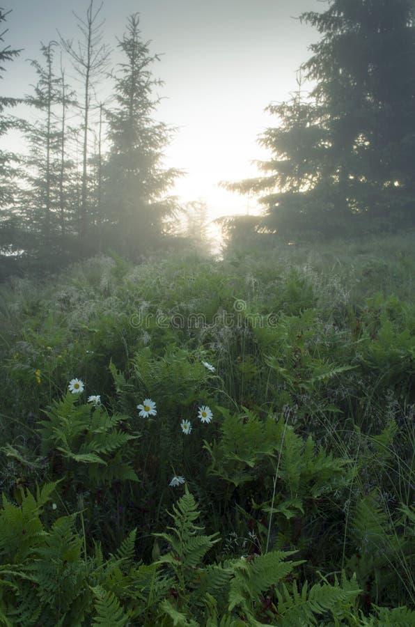 Het landschap van het bergplateau stock afbeeldingen