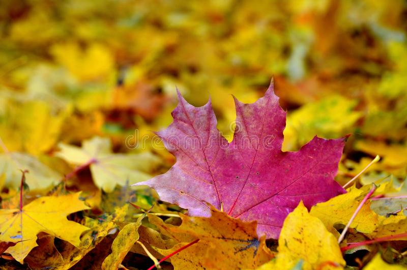 Het landschap van het de herfstblad stock fotografie