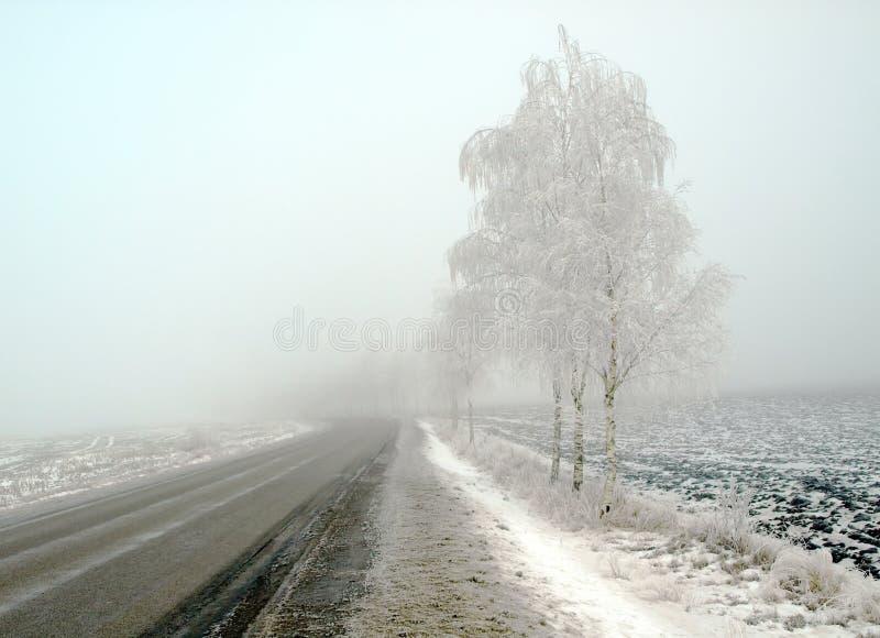 Het landschap van het land in vorst en mist