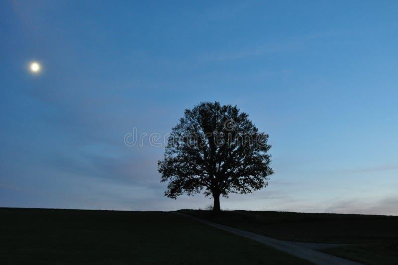 Het landschap van het maanlicht met enige boom stock afbeeldingen