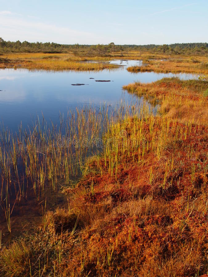 Het landschap van het moeras stock foto's