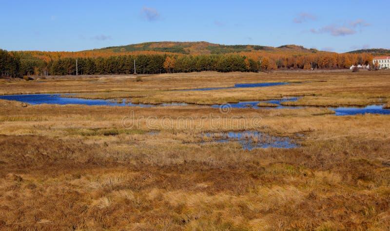 Het landschap van het moerasland stock foto