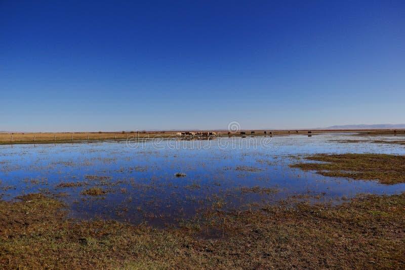 Het landschap van het moerasland royalty-vrije stock foto
