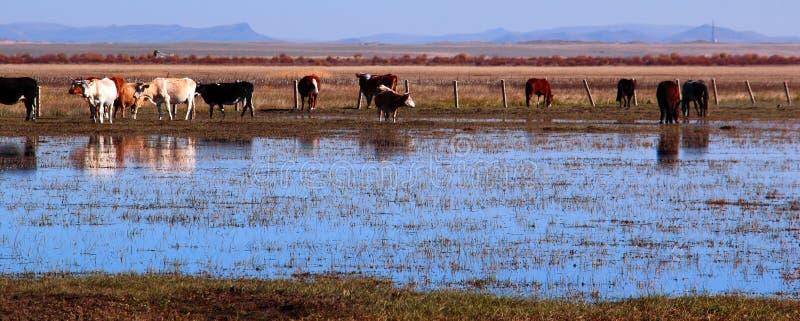 Het landschap van het moerasland stock foto's