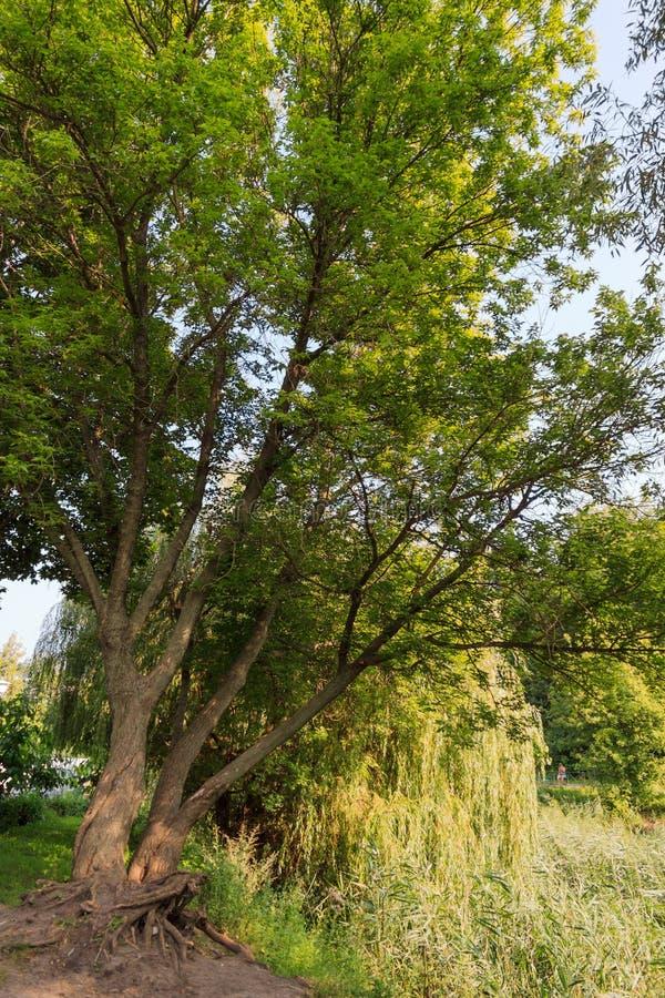 Het landschap van het park royalty-vrije stock afbeelding