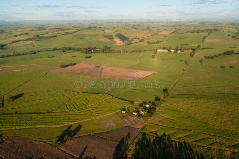 Het Landschap van het Suikerriet van de lucht royalty-vrije stock fotografie