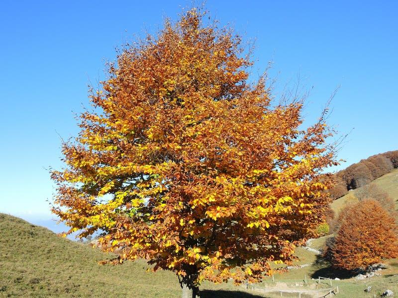 Het landschap van hout tijdens het de herfstseizoen met waarschuwt kleuren royalty-vrije stock afbeelding