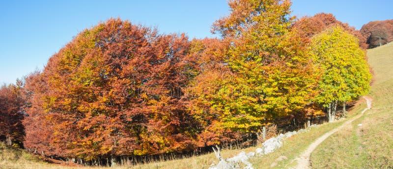 Het landschap van hout tijdens het de herfstseizoen met waarschuwt kleuren stock afbeelding