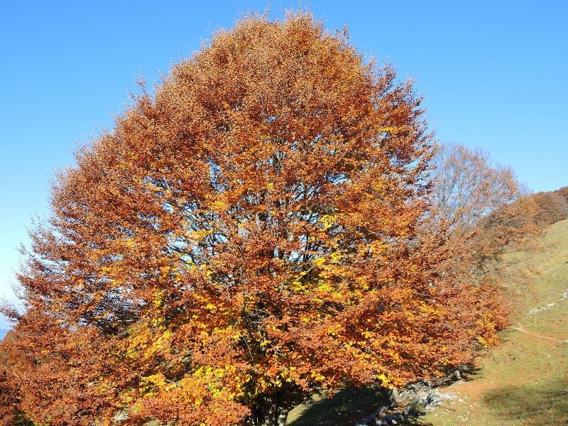 Het landschap van hout tijdens het de herfstseizoen met waarschuwt kleuren stock foto