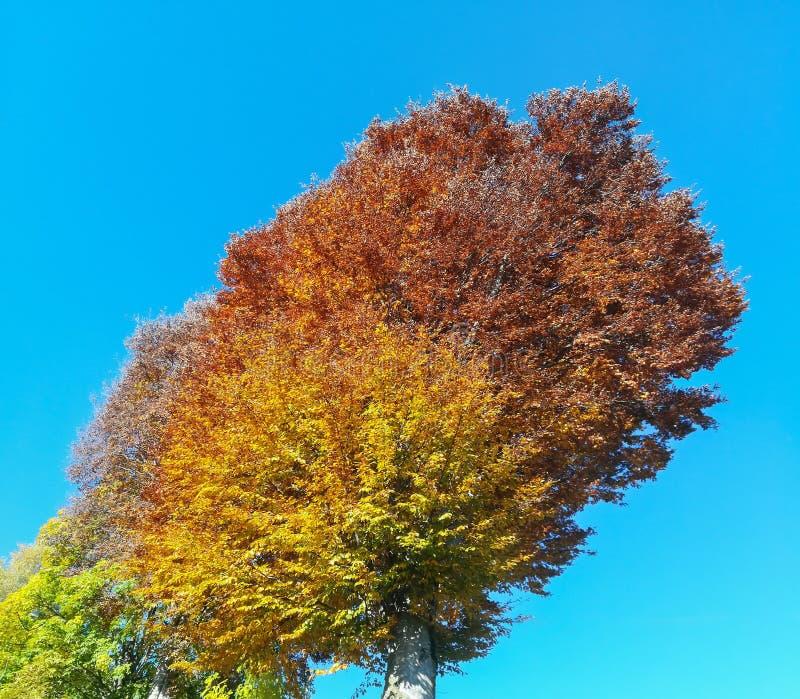 Het landschap van hout tijdens het de herfstseizoen met waarschuwt kleuren royalty-vrije stock foto