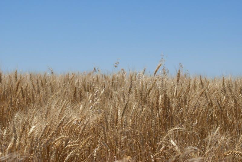 Het Landschap van Kansas stock afbeeldingen