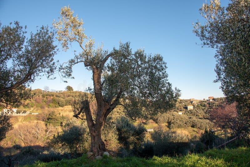 Het landschap van Ligurië royalty-vrije stock fotografie