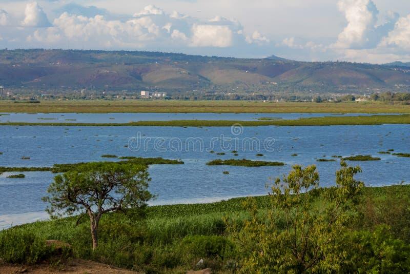 Het landschap van meervictoria dichtbij stad Kisumu in Kenia royalty-vrije stock afbeeldingen