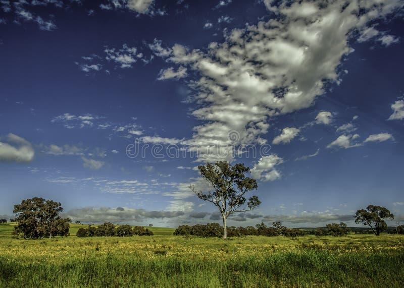 Het Landschap van Nieuw Zuid-Wales Australië stock afbeeldingen