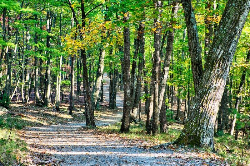 Het landschap van Noord-Carolina van de steenberg tijdens de herfstseizoen stock fotografie