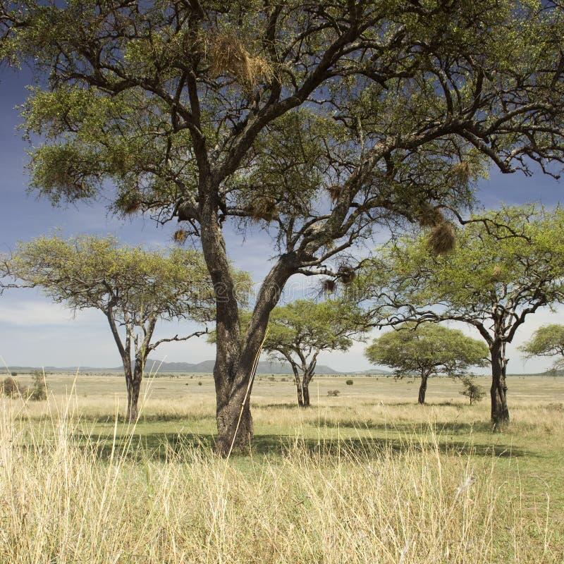 Het landschap van Serengeti royalty-vrije stock afbeelding