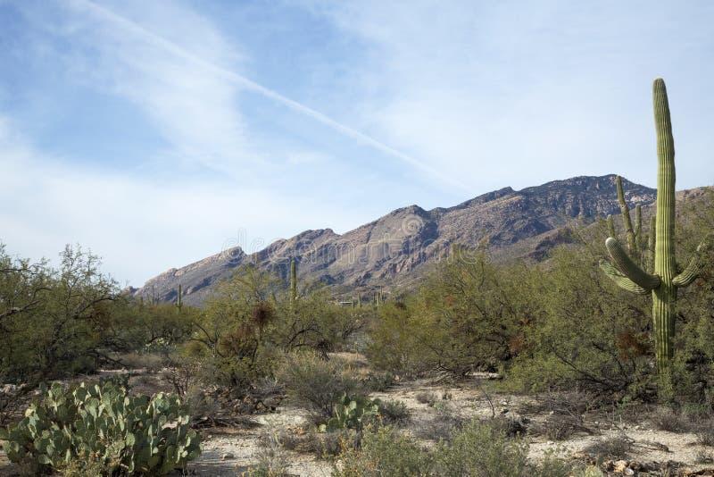 Het Landschap van Tucson royalty-vrije stock foto