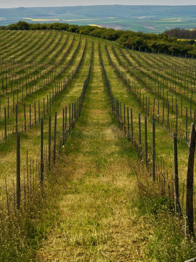 Het landschap van wijngaarden stock fotografie