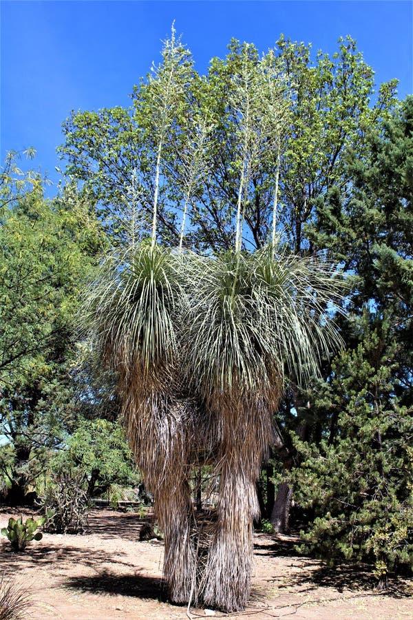 Het Landschap van het woestijnlandschap in Cochise-Provincie, Heilige David, Arizona wordt gevestigd dat stock fotografie