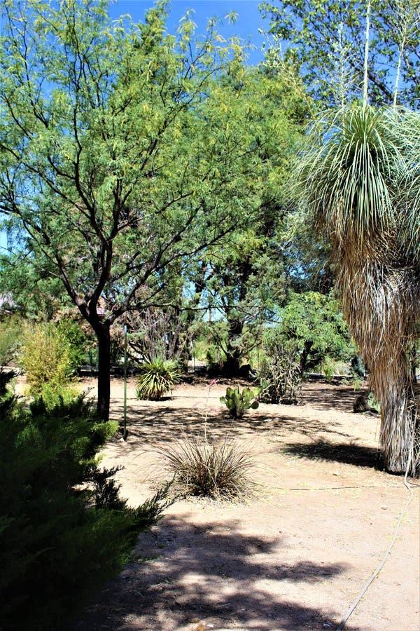 Het Landschap van het woestijnlandschap dat in Cochise-Provincie, Heilige David, Arizona wordt gevestigd royalty-vrije stock foto