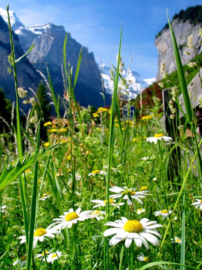 Het Landschap van Zwitserland royalty-vrije stock afbeelding