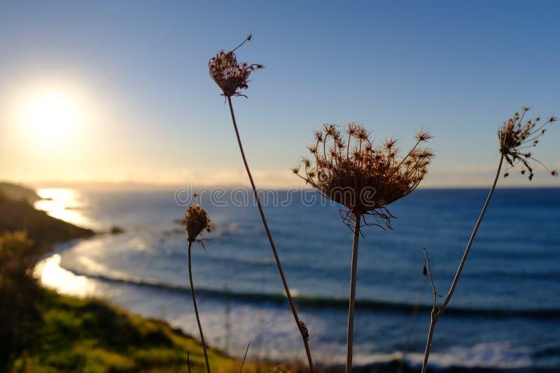 Het lange onkruid groeien op een overzeese kust stock afbeeldingen