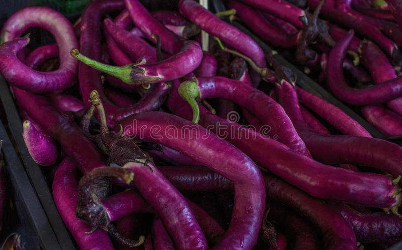 Het lange purpere eierplant of aubergine verkopen bij markt Venetië, Italië - september 2016: De markten van Rialtovissen Sluit o stock foto
