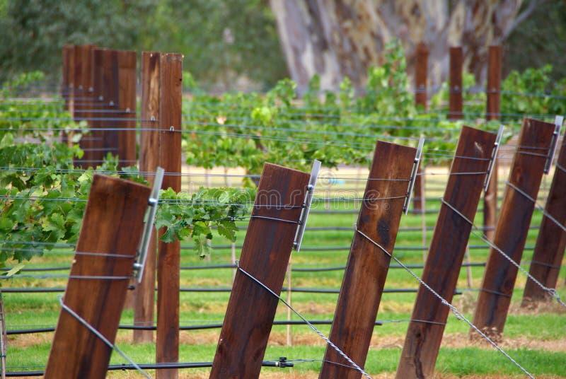 Het Latwerk van de wijngaard royalty-vrije stock afbeelding