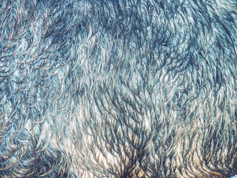 Het leer van het bontpaard Pluizige natte bruine paardhuid royalty-vrije stock fotografie