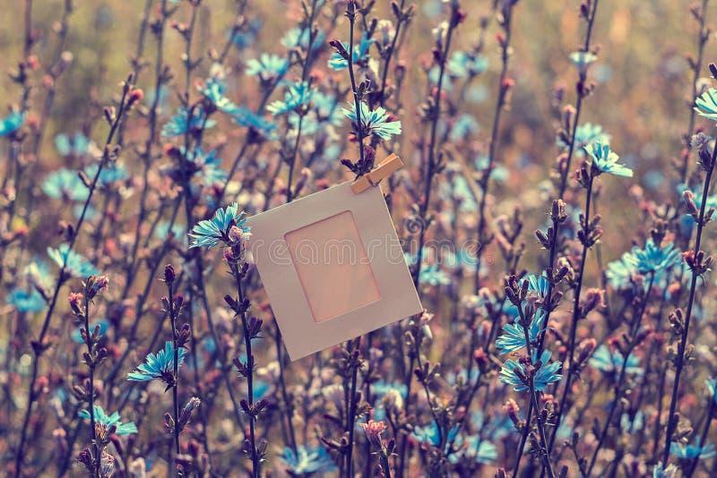 Het lege kader hangen op het bloemenwitlof in openlucht royalty-vrije stock foto's