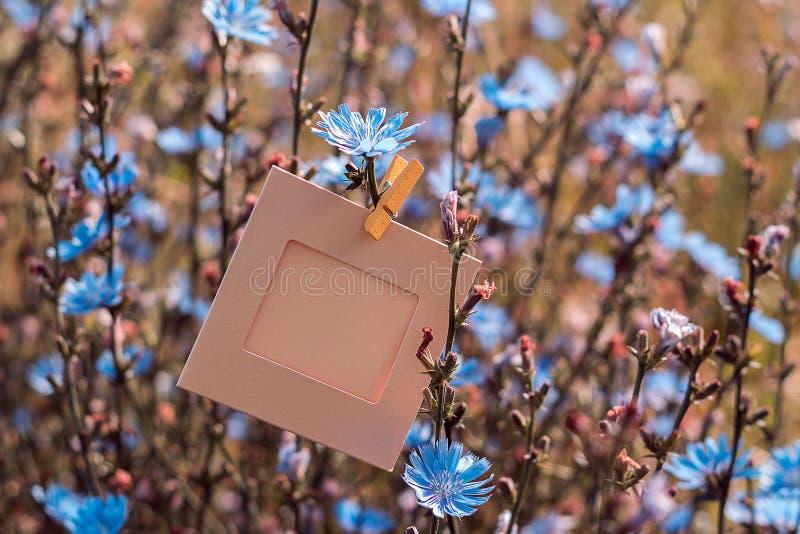 Het lege kader hangen op het bloemenwitlof in openlucht stock fotografie