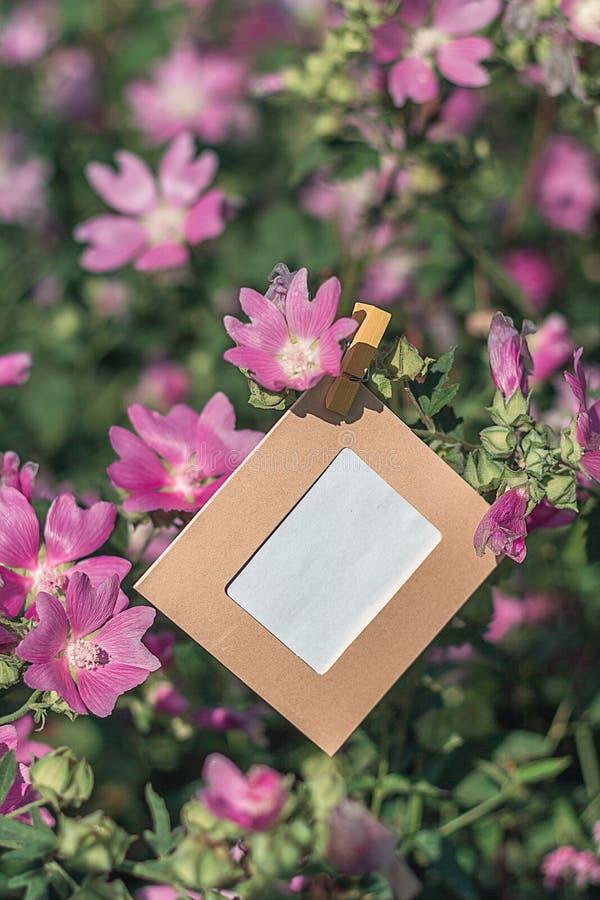 Het lege kader hangen op roze bloemen in openlucht stock afbeeldingen