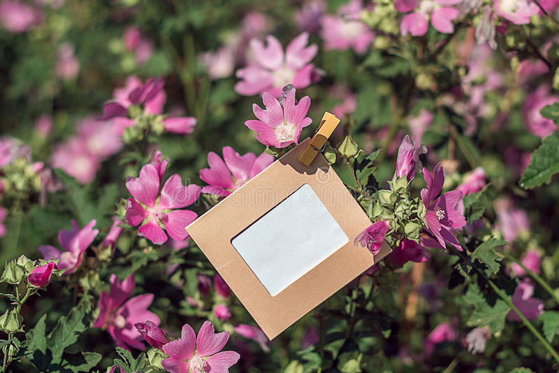 Het lege kader hangen op roze bloemen in openlucht stock foto