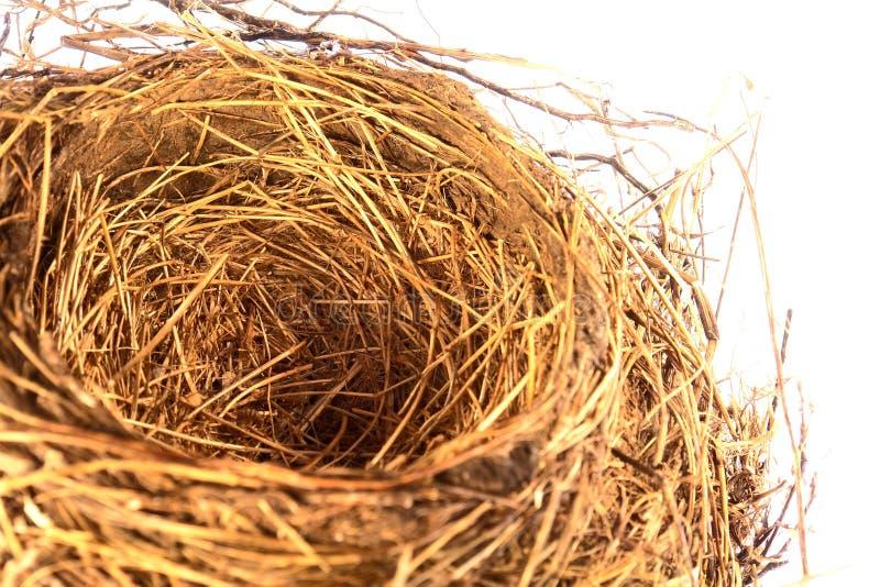 Het lege Nest van de Vogel royalty-vrije stock foto