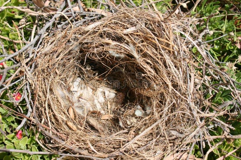 Het lege Nest van Vogels royalty-vrije stock afbeelding